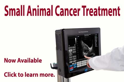 Small Animal Cancer Treatment